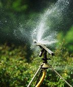 stock photo of water shortage  - Watering with a sprinkler in a botanical garden - JPG