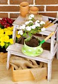 image of flower pots  - Flowers in pot on stepladder - JPG