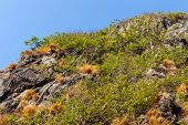 picture of jungle exotic  - a tropical and lush jungle on an exotic island called Phi Phi leh Thailand - JPG
