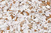 image of shells  - Crushed Egg Shells Background - JPG