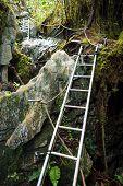 picture of gunung  - Ladders in jungle at pinnacles trek in gunung mulu national park borneo malaysia  - JPG
