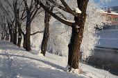 picture of ekaterinburg  - Frost on the trees on the embankment of the Iset River in Yekaterinburg - JPG