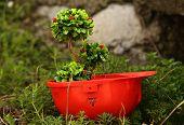 foto of environmentally friendly  - Green plant in helmet - JPG