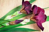 pic of purple iris  - On the surface of the table are two large beautiful iris flower with a beautiful purple color with green leaves - JPG