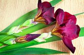 image of purple iris  - On the surface of the table are two large beautiful iris flower with a beautiful purple color with green leaves - JPG
