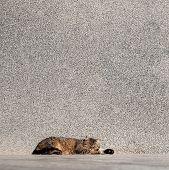 stock photo of tabby-cat  - Tabby cat laying on a sun near the wall - JPG