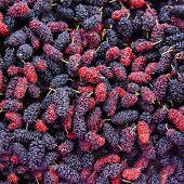 picture of mulberry  - Close up organic mulberry fruit harvested from the farm - JPG