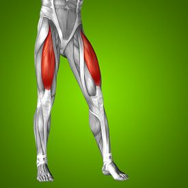 image of human muscle  - Concept or conceptual 3D human upper leg anatomy or anatomical and muscle on green gradient background - JPG