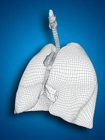 picture of respiratory  - Concept or conceptual anatomical human man 3D wireframe mesh respiratory system  with lungs on blue background - JPG
