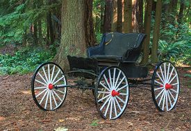 picture of carriage horse  - Abandon vintage horse drawn carriage in the woods - JPG