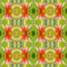 picture of bromeliad  - Bromeliad guzmania seamless pattern background - JPG