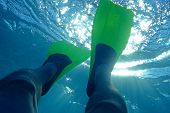 image of spearfishing  - Diving - JPG