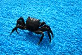 stock photo of crustations  - Black Crab on a towel summer background - JPG