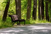 Empty Wooden Park Bench In The Shade Under Old Trees. Spring In The Park. poster