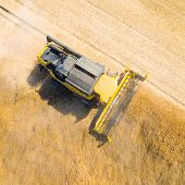 Aerial view of combine harvester. Harvest of rapeseed field. Industrial background on agricultural t poster