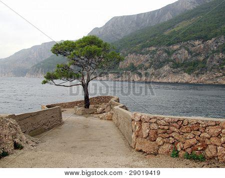 Постер, плакат: Одинокое дерево на берегу моря, холст на подрамнике