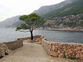 Постер, плакат: Одинокое дерево на берегу моря