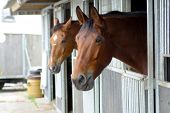 picture of stable horse  - view of two horse - JPG