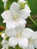 foto of white flower  - Beautiful white flower on green background - JPG