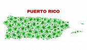 Vector Cannabis Puerto Rico Map Mosaic. Concept With Green Weed Leaves For Cannabis Legalize Campaig poster