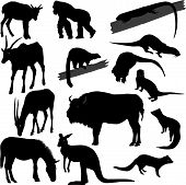 Silhouettes Of Different Animals poster