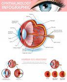 Human Eye Anatomy, Ophthalmology Infographic With Outside And Inner View Of Vision Organ. Cross Sect poster
