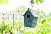 Bird House Or Bird Box In Summer Sunshine With Natural Green Leaves Background. Selective Focus. Cop poster