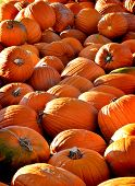 stock photo of cornicopia  - Pile of ripe orange pumpkins with stems - JPG