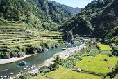 picture of luzon  - terraced rice fields of bontoc in northern luzon in the philippines - JPG