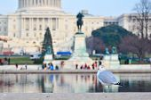 A seagull poses with US Capitol building background. Seagulls permanent hosts of the reflection pool