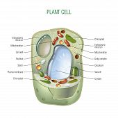 stock photo of biotech  - Plant cell cut - JPG