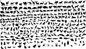 image of the hare tortoise  - 300 vector silhouettes of animals  - JPG