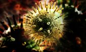 pic of influenza  - Digital illustration of Swine Influenza in colour background - JPG