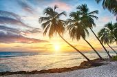 pic of atlantic ocean  - Beautiful sunset over the sea with a view at palms on the white beach on a Caribbean island of Barbados - JPG