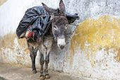 stock photo of donkey  - Donkey standing in an alley in Morocco - JPG