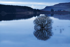 picture of carron  - A flooded tree at dusk in Carron Valley Reservoir in Scotland  - JPG