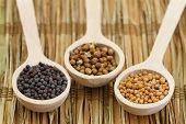 stock photo of mustard seeds  - Mustard seeds and coriander seeds on wooden spoons  - JPG