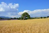 stock photo of plateau  - Stunning landscape with wheat field and old farmhouse - JPG