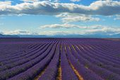 image of plateau  - Stunning landscape with lavender field at evening - JPG