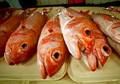 pic of red snapper  - Red Grouper Epinephelus morio also called Lapu-lapu in the Philippines and Rock Cod other places are for sale at a seafood market in Puerto Princesa Palawan Island Philippines.