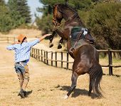 pic of cowboy  - cowboy trying to control his horse - JPG
