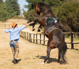 stock photo of western saddle  - cowboy trying to control his horse - JPG
