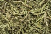 picture of substitutes  - stevia dried leaves background  - JPG