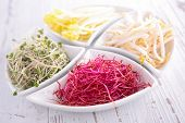 stock photo of soybean sprouts  - assortment sprouts - JPG