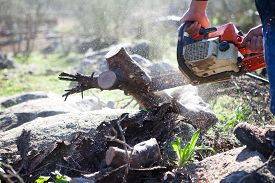 picture of man chainsaw  - Lumberjack worker cutting holm oak firewood with a chainsaw - JPG
