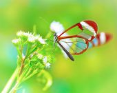 picture of insect  - Beautiful butterfly sitting on fresh wild flower in the forest - JPG