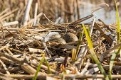 foto of bird egg  - Birds nest with eggs under natural conditions in early spring - JPG
