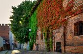 foto of ivy  - Gothic building overgrown with ivy old town in Torun - JPG