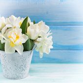 stock photo of daffodils  - Bright white daffodils and tulips flowers in bucket on turquoise painted wooden planks againsy blue wall - JPG