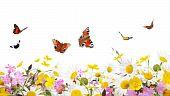 Постер, плакат: Цветы и бабочки
